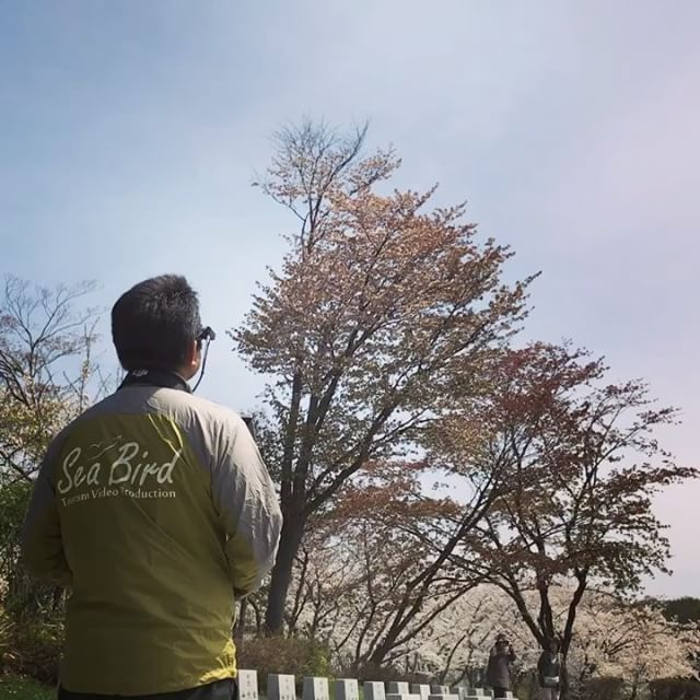厚田にてサクラ撮影風が強いのです